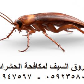 شركة مكافحة الحشرات بالدمام  0564947567